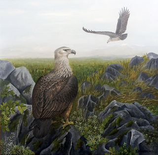 'This Too Has Passed - Haasts Eagle' by Janet Marshall