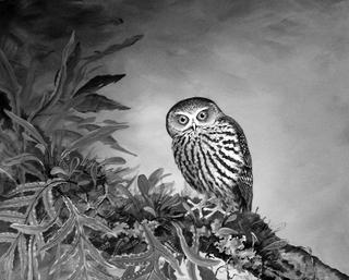 'Morepork' by Janet Marshall (SOLD)