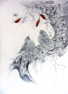 'Young Robins' by Janet Marshall