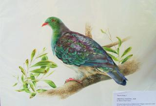 'Kereru' by Marie-Claire Colyer (SOLD)