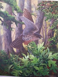 'Falcon' by Janet Marshall (SOLD)